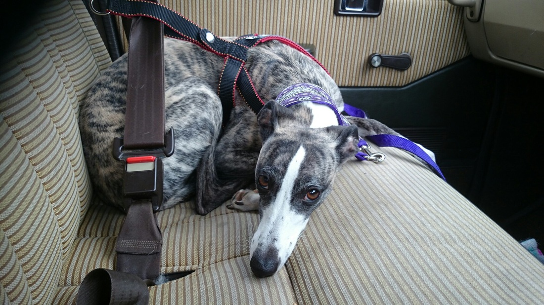 Purina Petlife Roadie Review Road Test Avias Whippets